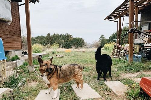 犬写真.jpg